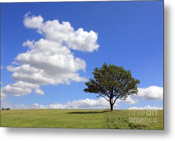 Tree With Clouds Metal Print