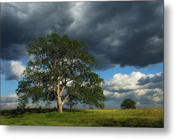 Tree With Storm Clouds Metal Print