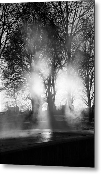 Trees And Fog Metal Print by David Pinsent