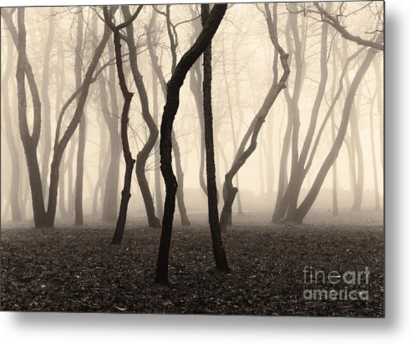 Trees And Fog No. 1 Metal Print