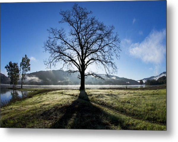 Trees Are Us Metal Print