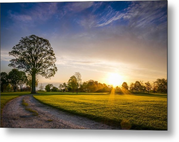 Trees At Dawn On Golf Course Metal Print