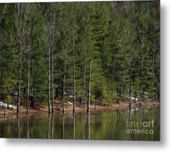 Trees At The Reservoir Metal Print