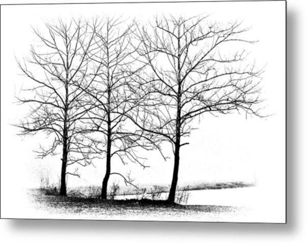 Trees At Water's Edge Metal Print