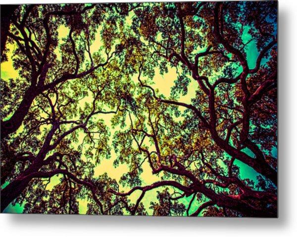Trees Closing In Metal Print