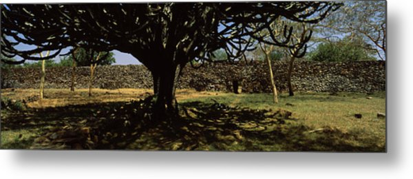 Trees In A Field With A Stone Wall Metal Print