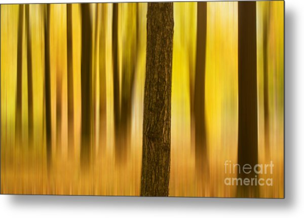 Trees In Autumn Forest Metal Print
