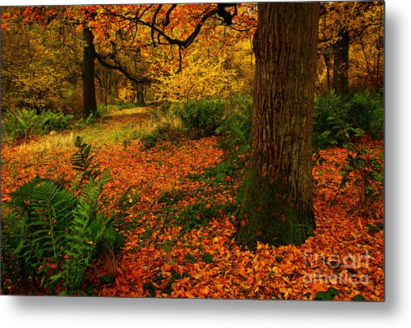 Trees In Autumn Woodland Metal Print