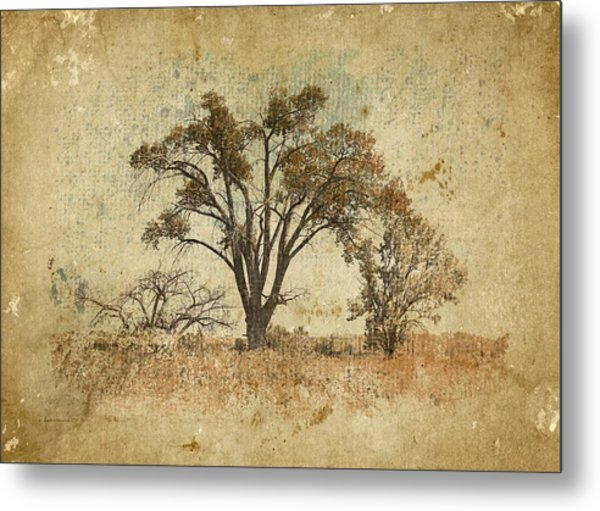 Trees In The Lowland Metal Print