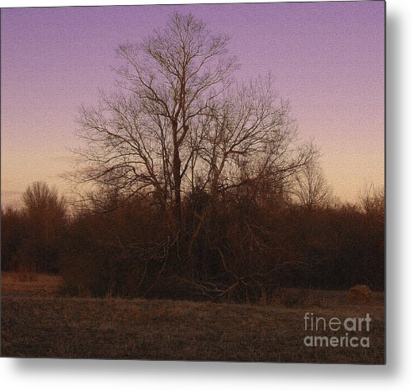 Trees In The Setting Sun Metal Print by R McLellan
