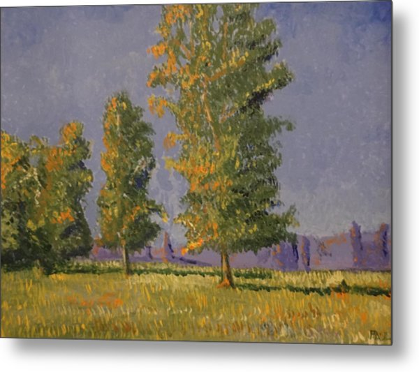 Trees In The Summer Metal Print by Paul Benson