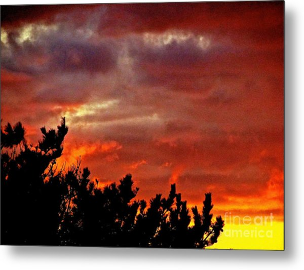 Trees Knowing The Sky Metal Print by Q's House of Art ArtandFinePhotography
