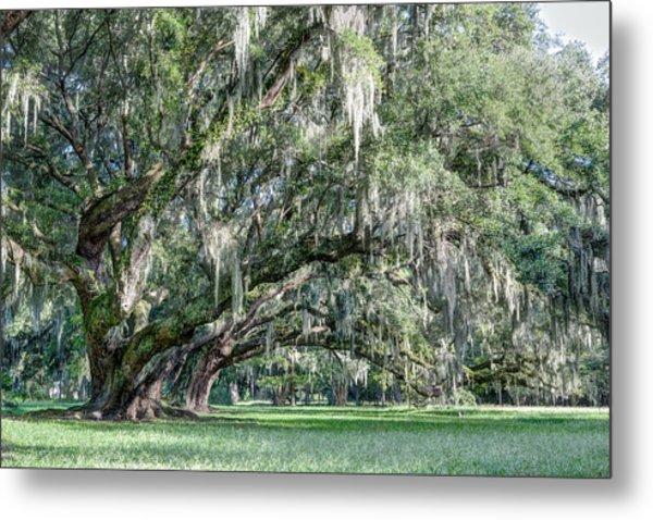 Trees Of Magnolia Metal Print