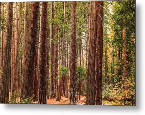 Trees Of Yosemite Metal Print