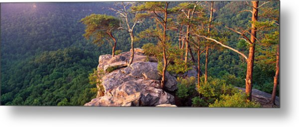 Trees On A Mountain, Buzzards Roost Metal Print