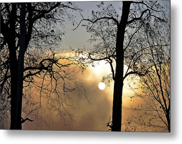 Trees On Misty Morning Metal Print