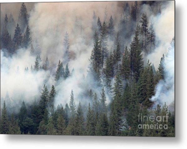 Beaver Fire Trees Swimming In Smoke Metal Print