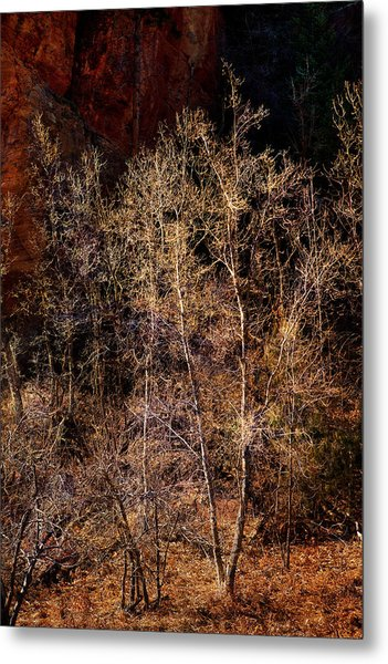 Metal Print featuring the photograph Trees West Fork Trail by Bob Coates
