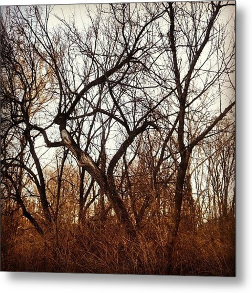 Trees With Figures Metal Print