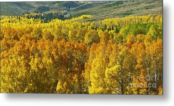 Tri Color Aspen Metal Print