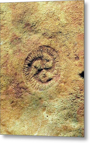 Tribrachidium Fossil Metal Print by Sinclair Stammers/science Photo Library