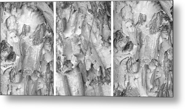 Triptych Of Curling Tree Bark In Black And White With A White Background Metal Print