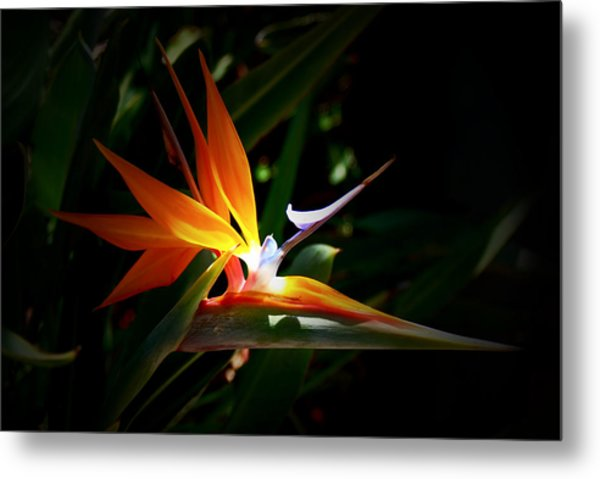 Tropical Bloom Metal Print
