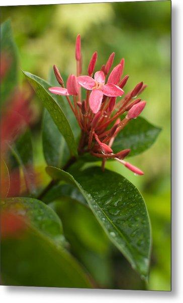 Tropical Flowers In Singapore Metal Print