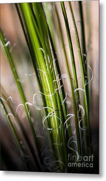 Tropical Grass Metal Print