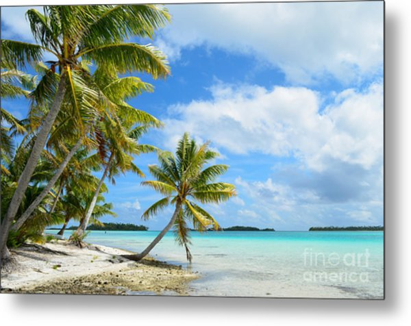Tropical Beach With Hanging Palm Trees In The Pacific Metal Print