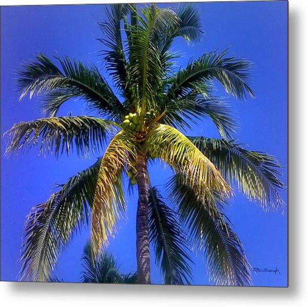 Tropical Palm Trees 8 Metal Print
