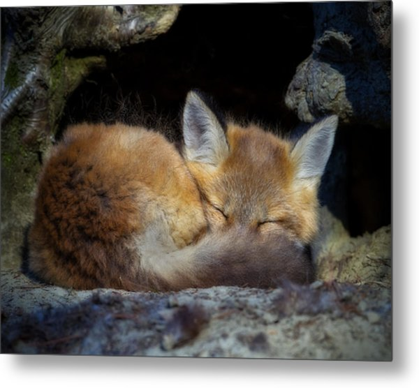 Fox Kit - Trust Metal Print