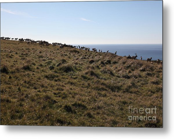 Tules Elks Of Tomales Bay California - 5d21276 Metal Print by Wingsdomain Art and Photography