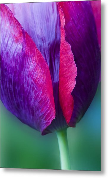 Tulip Bright  Metal Print
