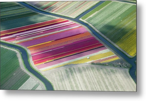 Tulip Fields, Aerial View, South Metal Print by Frans Sellies