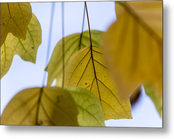 Tulip Tree Metal Print