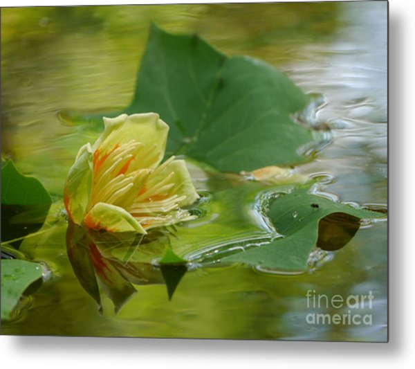 Tulip Tree Flower Metal Print