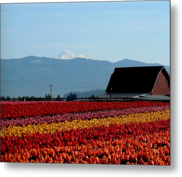 Tulips And Barn 2 Metal Print