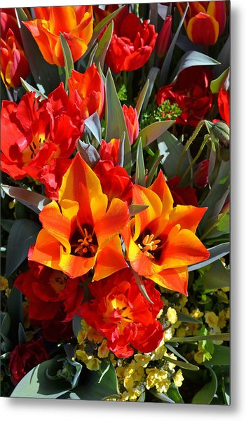 Tulips At The Pier Metal Print