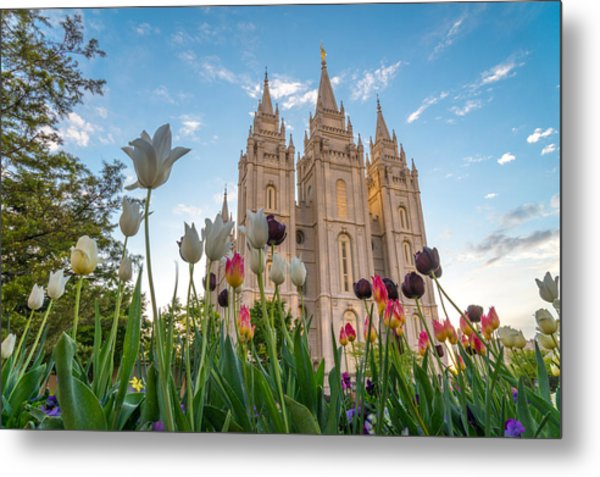 Tulips At The Temple Metal Print
