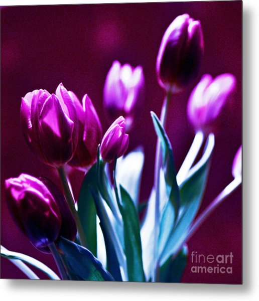 Tulips In Purple Metal Print
