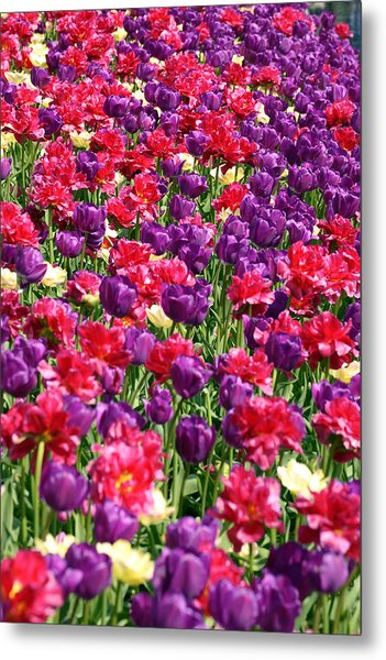 Tulips In A Meadow Metal Print