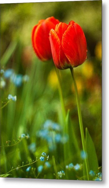 Tulips In Garden Metal Print