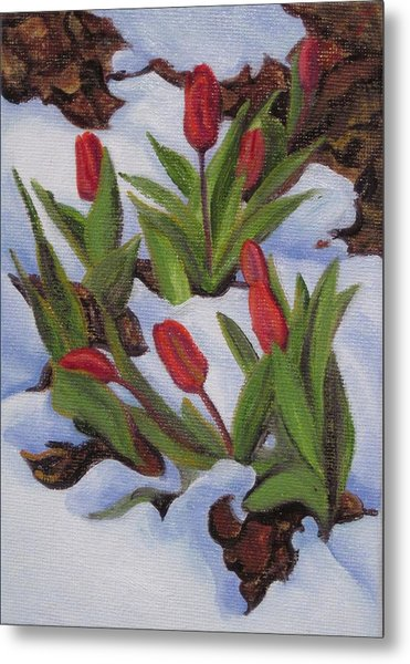 Tulips In Snow Metal Print