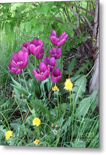 Tulips In Summer Metal Print
