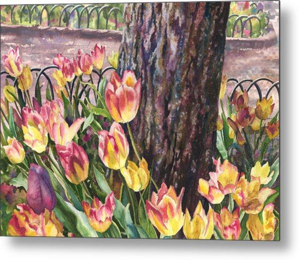 Tulips On The Mall Metal Print
