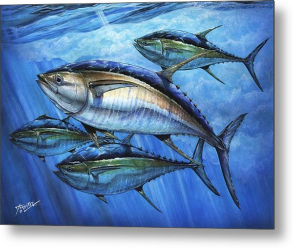 Tuna In Advanced Metal Print