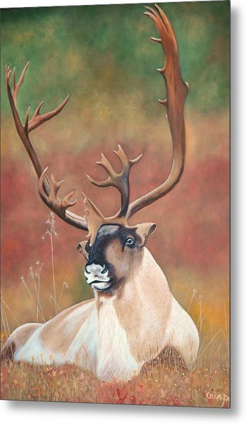Tundra Caribou Metal Print
