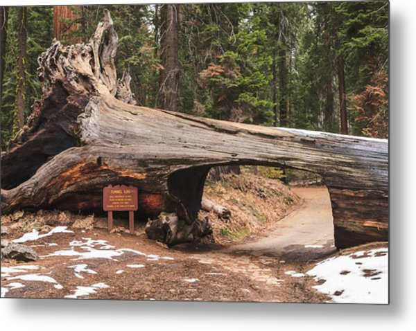 Tunnel Log Metal Print