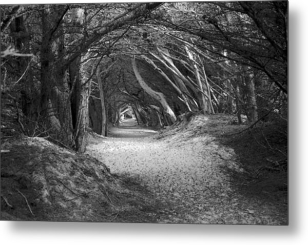 Tunnel To The Dunes In Black Metal Print